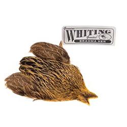 Whiting Brahma