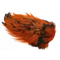 Whiting Rooster saddel - Badger Burnt Orange
