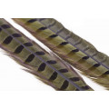 Ringneck Tail 1 Pair - Olive