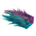 Whiting Rooster Coq de leon Predator pack - Blue/Purple