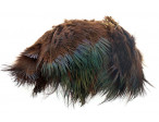 Ringneck Rump Hackle - Chocolate Brown