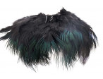 Ringneck Rump Hackle - Black
