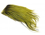 Whiting Bugger Pack - Olive Badger