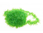 Cactus Chenille - Fluo. Green Highlander (15 mm)