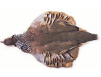 French Partridge - Complete