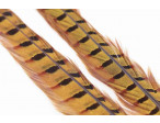 Ringneck Pheasant Tail 1 Pair - Golden Yellow