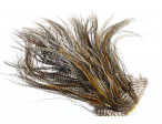 (Platinium Grade) Whiting Hebert Miner Saddle - Cree