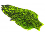 Whiting American Hen Cape Black Laced - Chartreuse