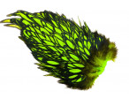 Whiting American Hen Saddle Black Laced - Green Chartreuse