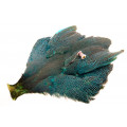Whiting Whole Guinea fowl - Kingfisher