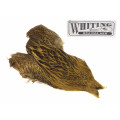 Whiting Brahma - Cape Golden olive