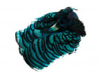 Amherst Fasan Hoved - Kingfisher Blue