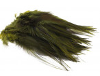Hane Hackler Badger - Olive