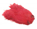 Hen patch (Indian) - COTR red