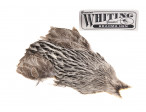 Whiting Brahma - Creme Badger