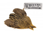 Whiting Brahma - Golden Straw
