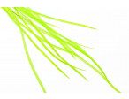 Loose Flatwing feather grade 1: Chatreuse