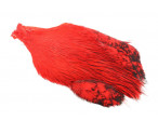 Keough Saltwater Cape - Red