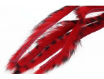 3 mm Rabbit Barred zonkerstrip - Red