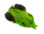 4B Whiting rooster - Badger Dyed Fl. Green Chart.