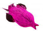 4B Whiting rooster - Badger Dyed Pink