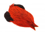 4B Whiting rooster - Badger Dyed Orange