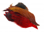 4B Whiting rooster - Brown/Badger Dyed Red