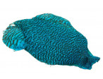 Keough Saltwater Cape - Grizzly Kingfisher Blue
